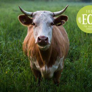 Secret Life Farm Animals